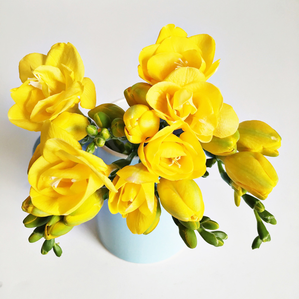 Yellow-freesias