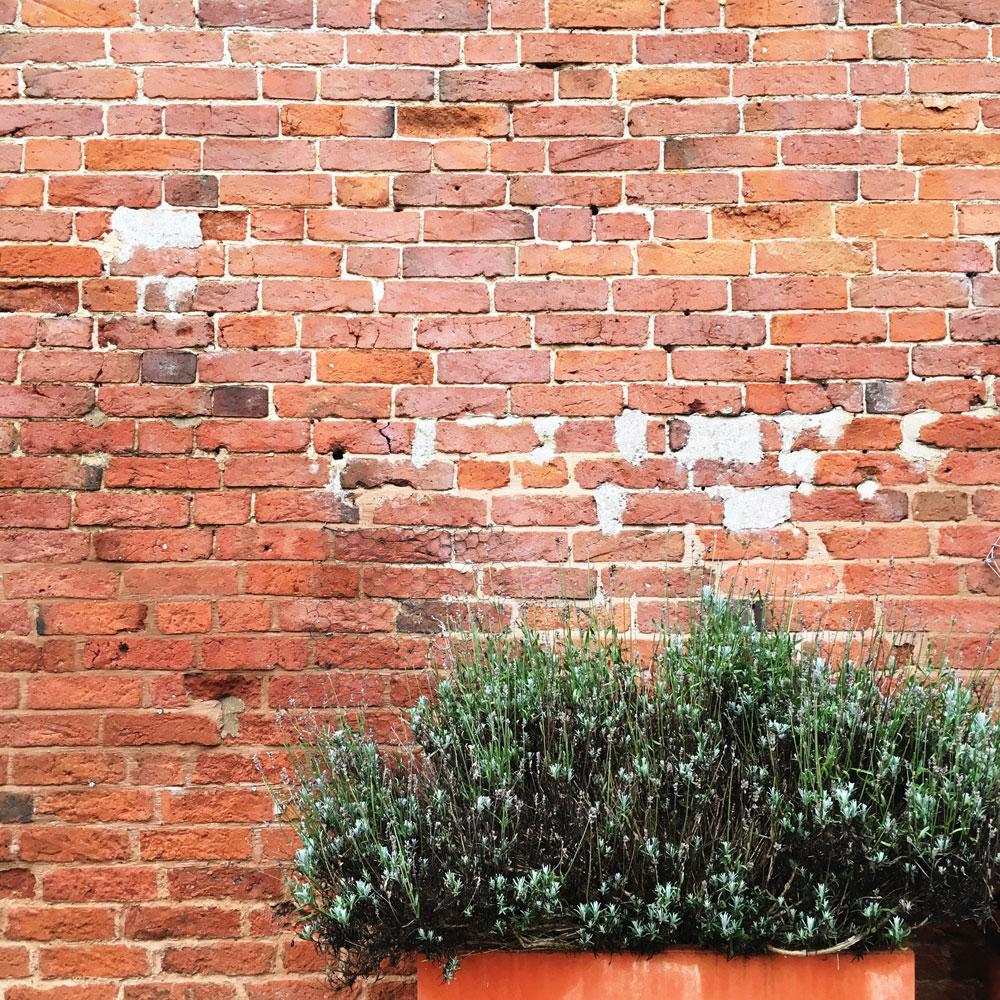 brick-wall-and-bush