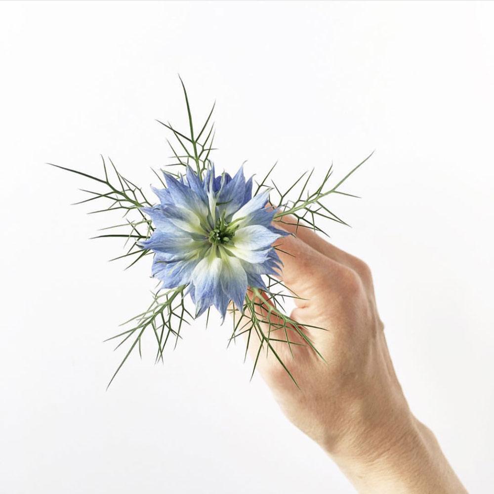 FB-Group-flower